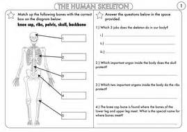 Year 3 Animals, Including Humans The Skeleton, Muscles And Movement By Beckystoke Teaching