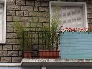 Bambou En Pot Pour Terrasse : bambou en pot ou jardini re quelle vari t comment l 39 entretenir ~ Louise-bijoux.com Idées de Décoration