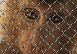 10 Photos of Sad Animals In Zoos