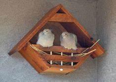 Fréquence Ponte Poule : construire des pondoirs nichoirs pour poules plans jardin pinterest nichoirs poule et ~ Melissatoandfro.com Idées de Décoration