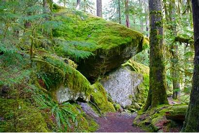 Olympic Staircase National Park Trail Hiking Loop