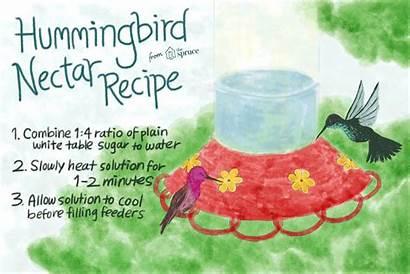 Nectar Recipe Hummingbird Hummingbirds Feeder Water Flowers