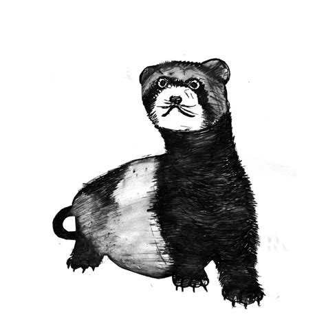 ferret art print black  white animal ink drawing series
