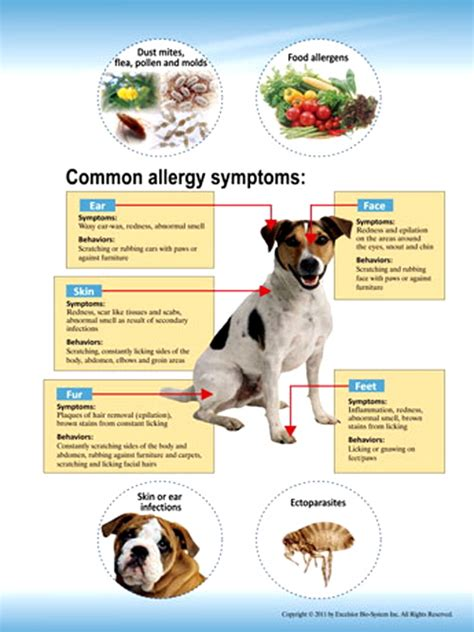 arrayit allerspot pet allergy testing service dogs cats