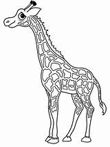 Giraffe Cartoon Draw Drawing Head Cartoons Drawings Sketch Outline Animals Coloring Larger Credit sketch template
