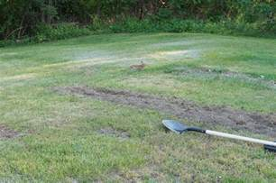 Groundhog Repellent Moth Balls