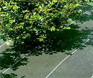 Bache Sol Jardin : les toiles de paillage tuent le sol conseils coaching jardinage des conseils pour votre jardin ~ Teatrodelosmanantiales.com Idées de Décoration