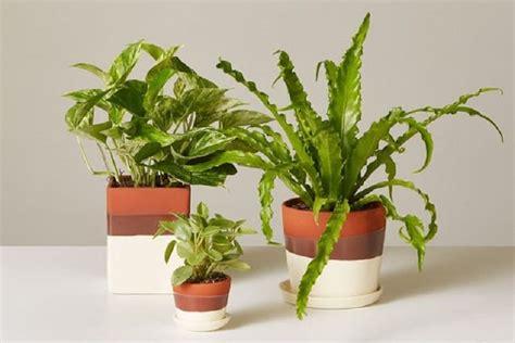 tanaman bisa menjaga suhu ruangan tetap sejuk