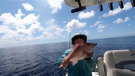 gag grouper season