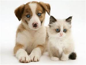 Cute Pictures of Puppies and Kittens Together | Pets World