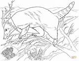Coloring Anteater Coati Forest Printable Giant Looking Designlooter Drawing Supercoloring 82kb 796px 1024 Categories sketch template