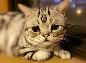 Meet Luhu: The Saddest Kitten In The World - CatTime