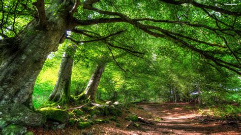 Green Forest Image Desktop by Green Forest Background 183 Wallpapertag