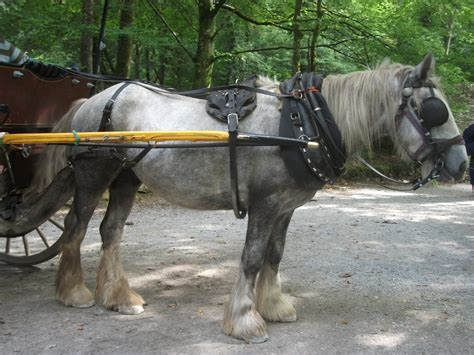 docking horses tails horse harness mud