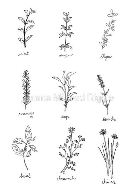 Black and white pen drawings of herbs. • Also buy this