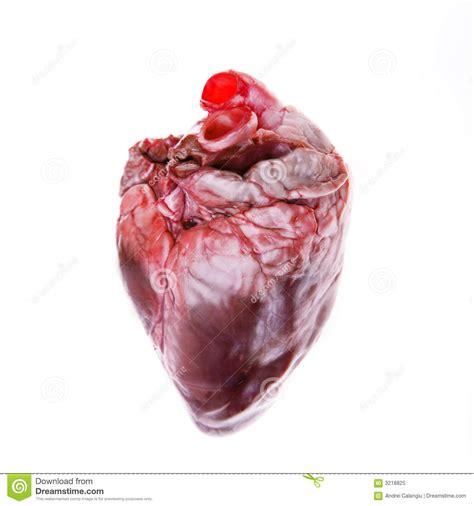 real heart royalty  stock photo image