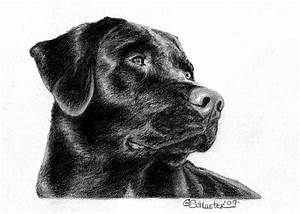 The Black Lab Sketch Drawing by Genevieve Schlueter