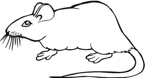 صور تلوين فئران 2014 ، صور رسومات فئران للأطفال جاهزة