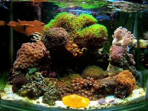 best fish reef tank top one of the most discussed japanese reef tanks 2017 fish tank