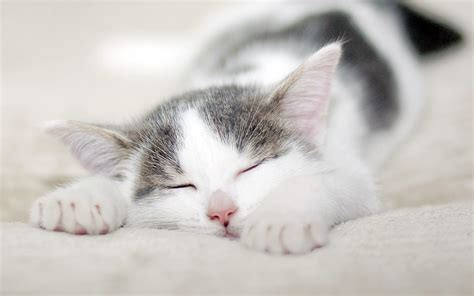 可爱的小猫壁纸桌面_桌面壁纸_电脑桌面壁纸高清_图片大全_桌面背景壁纸图片_酷图吧壁纸下载