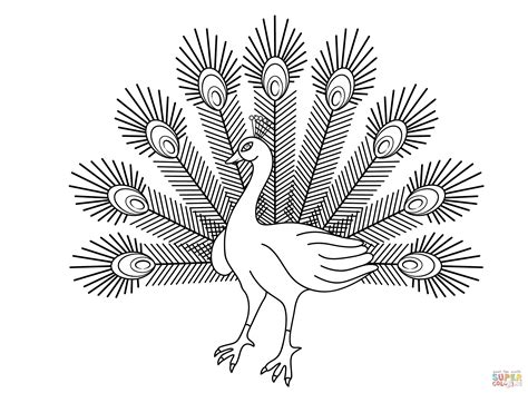 Peacock Coloring Pages Bestofcoloringcom
