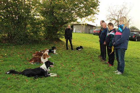 training verhaltenstherapie fuer ihren hund