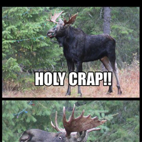 Moose Meme - meme center ohmahstarz profile