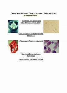 Parasitology  Lab Manual Of Veterinary Parasitology  With