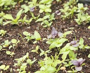 semer ma jardiniere facile aux 3 basilics galerie photos With maison humide que faire 7 semer de la pelouse