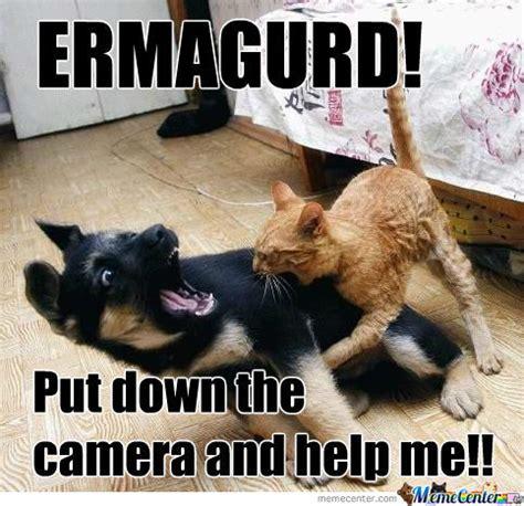 Dog Cat Meme - cats vs dogs by ryu amio meme center