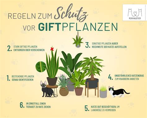 Giftige Zimmerpflanzen Für Katzen by Uniq Gmbh Annika Hunkem 246 Ller Autor Auf Uniq Gmbh