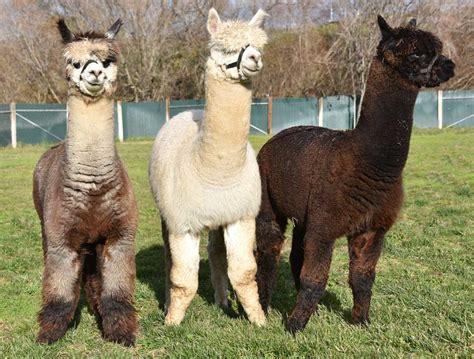 animals hoofed toed zoo monterey
