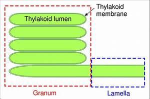 File Granum Svg