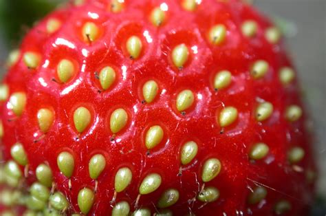 cuisine nature image gallery macro fruit