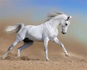 Caballo blanco - Imagui