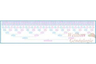 8 Generation Family Tree Template