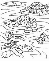 Pond Coloring Pages Turtle Frog Sea Ponds Pixel Sheet Sheets Printable Colornimbus Turtles Frogs Print Adult Preschool Template Around Width sketch template