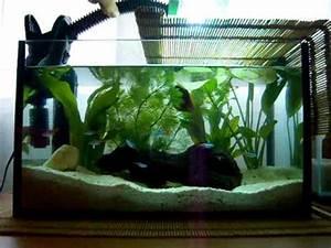 My Aquarium With Betta Neon Tetra Aquatic Plants