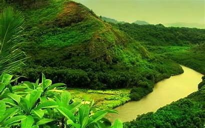 Nature Wallpapers Backgrounds Desktop Background Greenery Forest