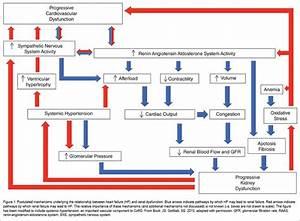 Types Of Azotemia - Diagnosis Flow Chart