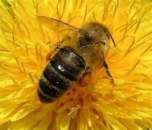 Wie Machen Bienen Honig : startseite ~ Whattoseeinmadrid.com Haus und Dekorationen