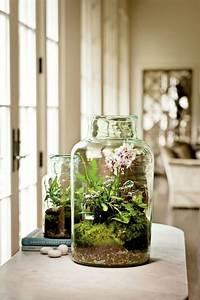Orchideen Im Glas : innen pflanzgef e orchidee farne peperomie moos glas ~ A.2002-acura-tl-radio.info Haus und Dekorationen