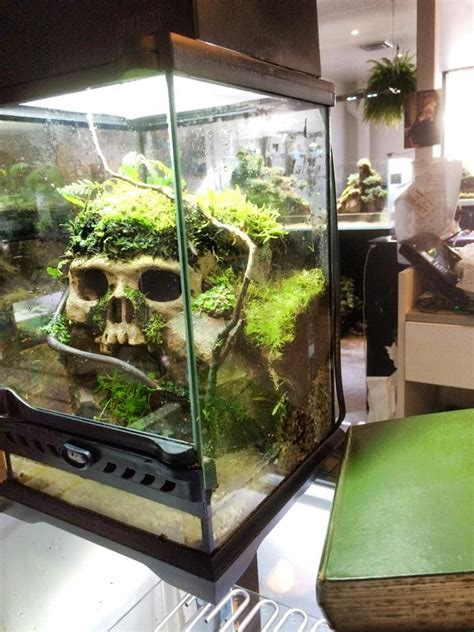 25 best ideas about snake terrarium on flowering house plants plants and
