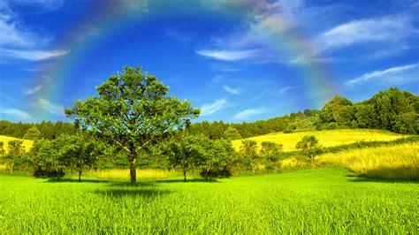 bäume schneiden im sommer die 69 besten regenbogen hintergrundbilder