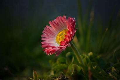 Nature Flowers Petals Colorful Plant Flower Resolution