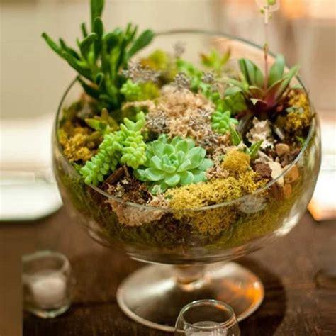 indoor succulent garden 15 best indoor succulent planting ideas that can beautify