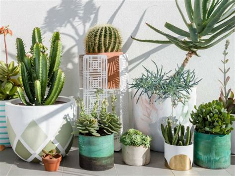 10 Biggest Mistakes Beginners Make in Trying to Grow Cacti ...