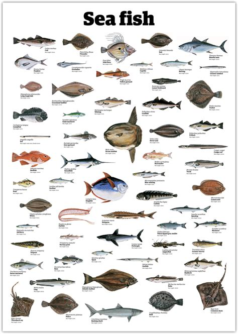 fish names sea fish pictures and names