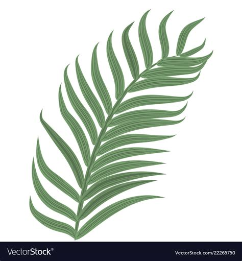 This is a fun palm sunday craft that works a lot like cutting out paper snowflakes. Palm Leaf Template Pdf | PDF Template