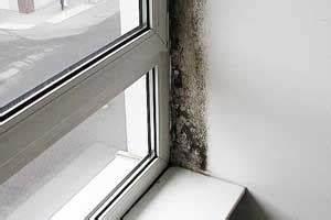 Kunststofffenster Verfärbungen Entfernen : schimmel am fenster so entfernen sie den schimmel dauerhaft ~ Watch28wear.com Haus und Dekorationen
